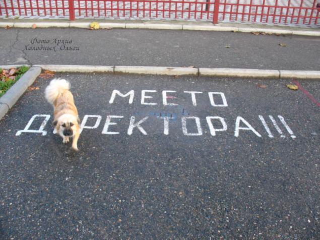 директор, пес