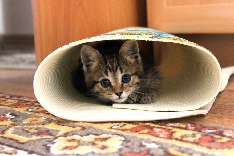котик, домашний уют