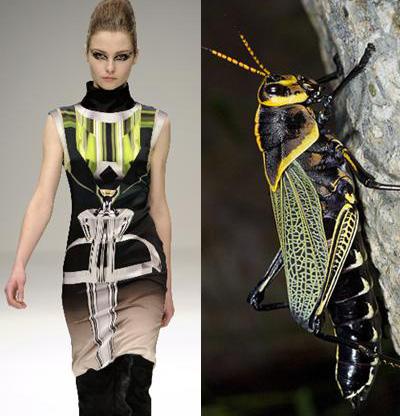 насекомые в моде