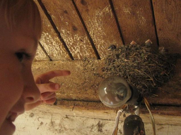воспитаение детей, дети и природа