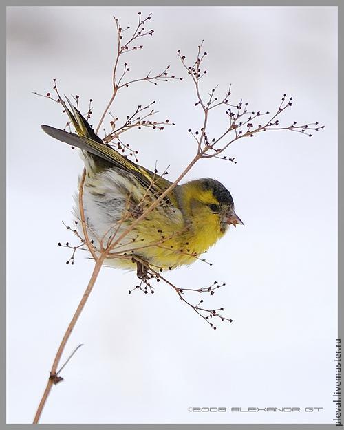 рисуем птицу