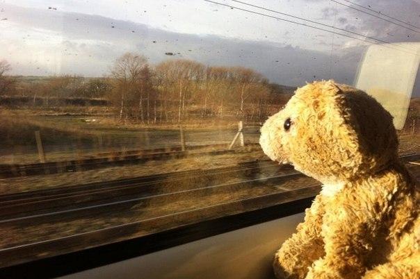история, тедди, потеряшка, поезд, twitter, кинг-кросс, мишка, поиски, лондон, великобритания