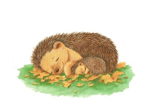 hoggy and mummy sleeping