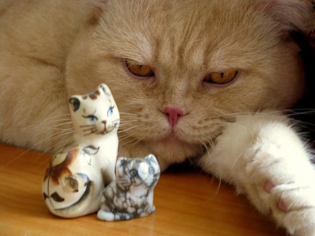 личное, кошачий блюз