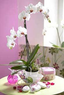 цветы из полимерной глины, холодный фарфор, мастер-класс по лепке, школа лепки цветов, флористика
