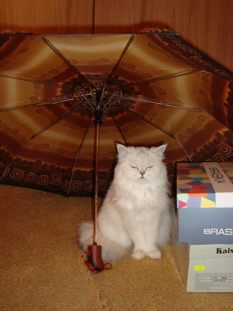 домашние животные, хокку, стихи о кошках