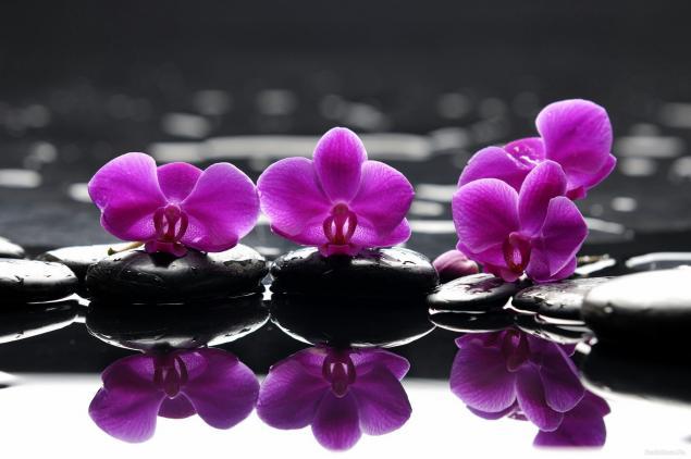 браслет шамбала, фиолетовый браслет, браслет со смыслом, эксперимент