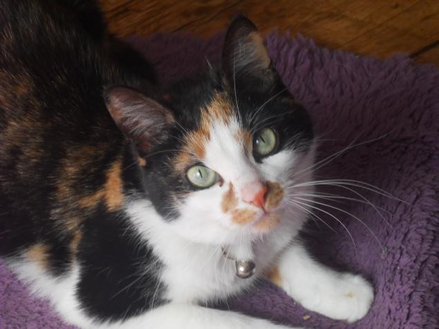 кошка, домашний любимец, день кошек, пушистый ласковый