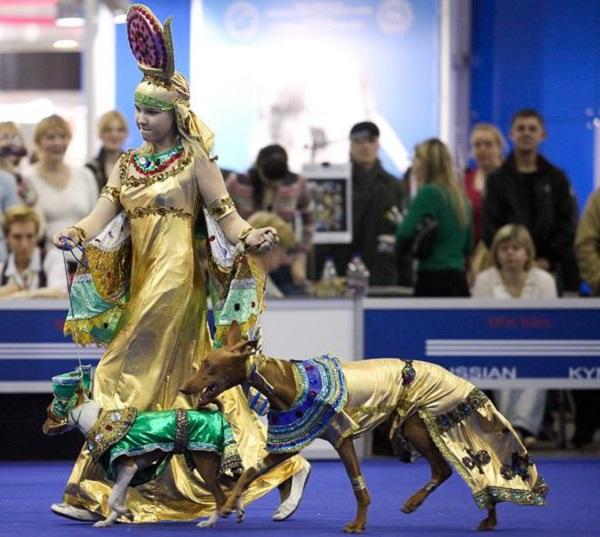 Конкурс костюмов на выставках