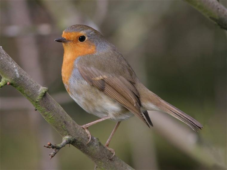 Каждой птице свой дом, фото № 15