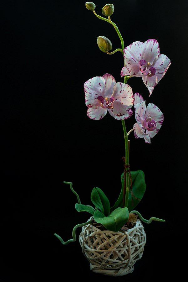 реалистичная орхидея, лепка в краснодаре