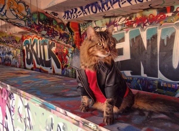 кот лоренцо