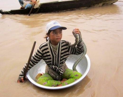 кожа крокодила, камбоджа, крокодиловый браслет