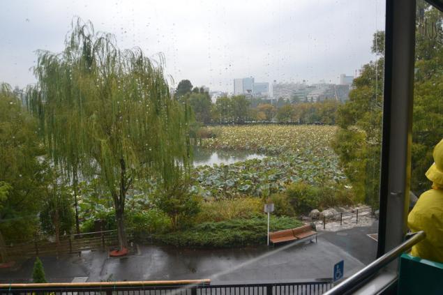 Дикий забег по Токио за 7 дней. День пятый. Зоопарк Уэно и детские магазины., фото № 29