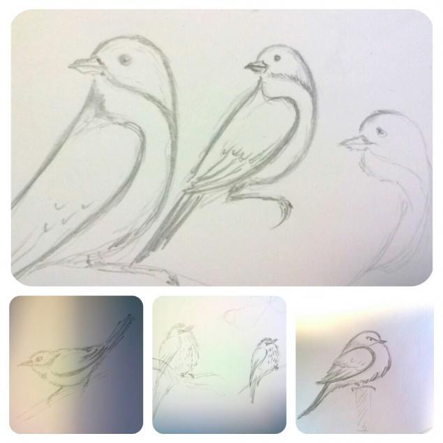 набросок, птица, птицы, история