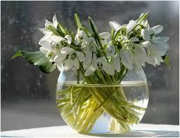 Подснежник - символ весны, надежды и чистоты!, фото № 5