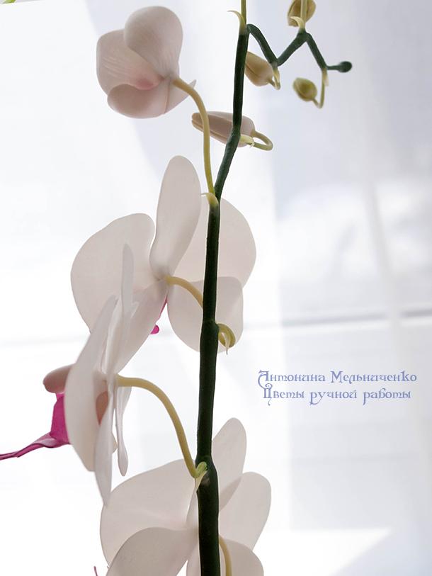 лепка, лепка из глины, лепка из пластики, керамическая флористика, полимерная глина, орхидеи