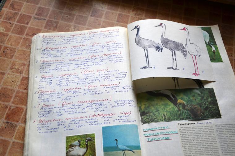 валяние, орнитология
