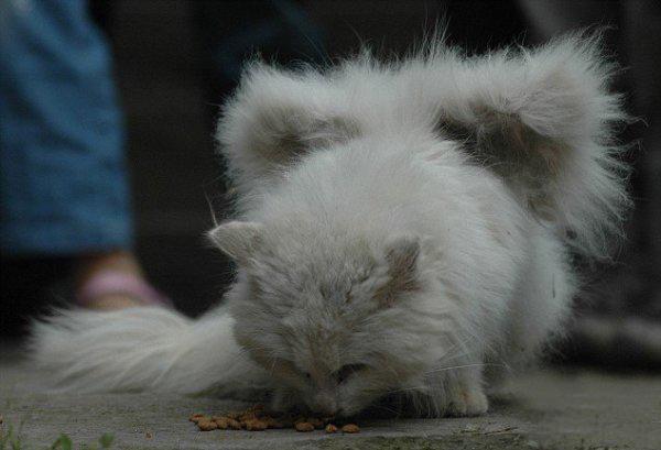кошка, крылатая кошка, идеи для вдохновения