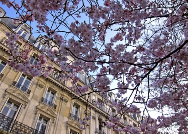 Весенний Париж, дыхание теплого ветра, фото № 33