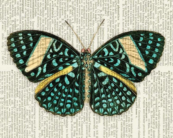 текст с бабочками