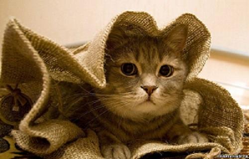 конкурс, коллекции, кот в мешке