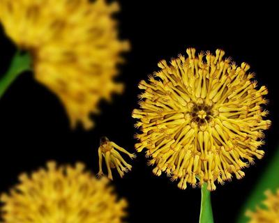 люди и цветы