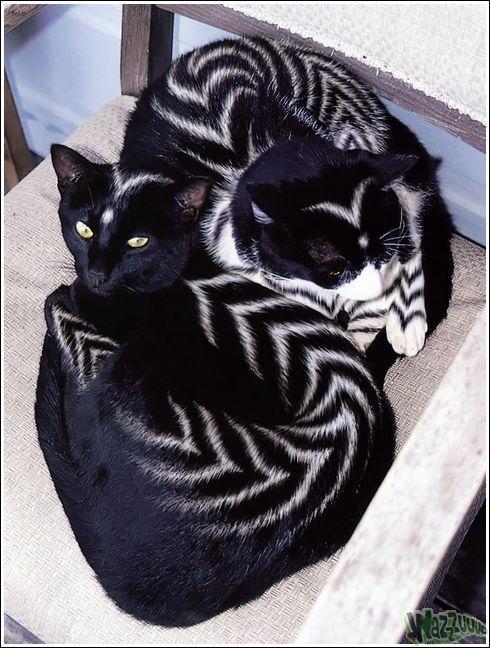 Зачем красить кошек?, фото № 30
