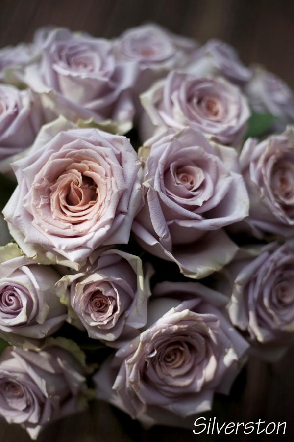 Цвет пепел розы фото