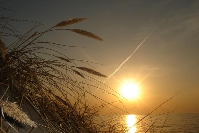 Море сосны и песок