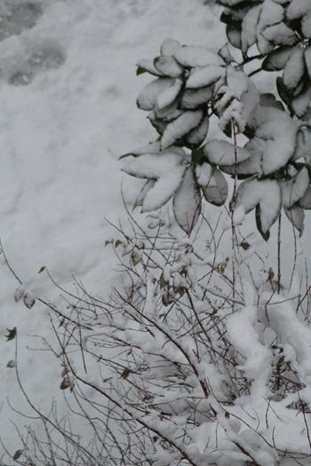 черноморская зима