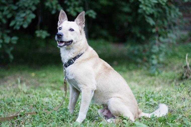 сос, собака, собачка, собака ищет дом, помощь, помогите, помощь животным, поможем вместе