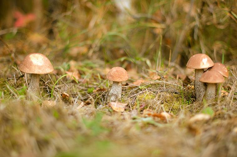 грибы, семейный фотограф, фотография, природа