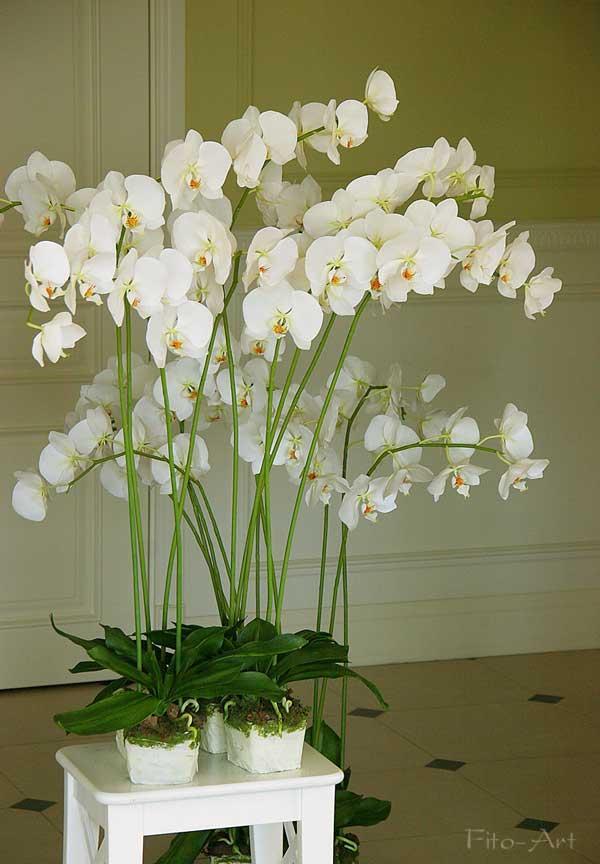 лепка орхидеи