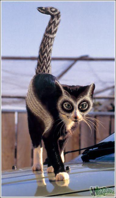Зачем красить кошек?, фото № 6