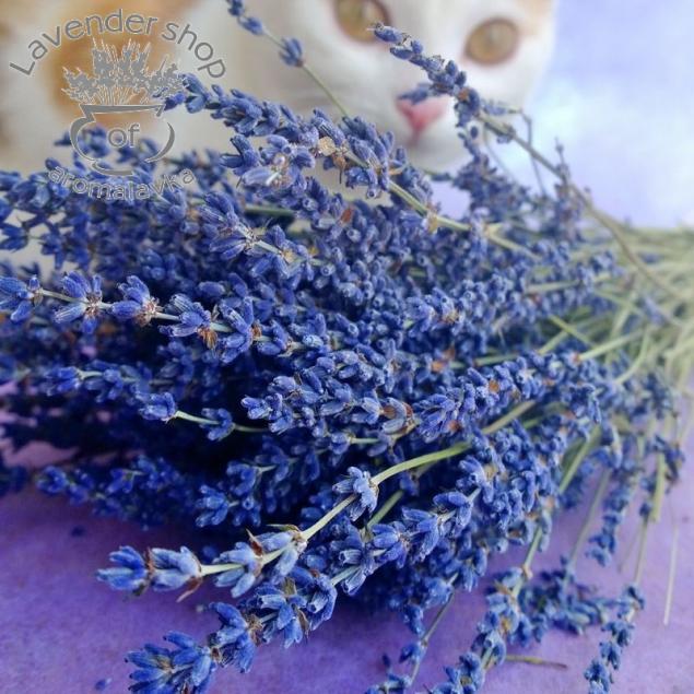 лавендершоп, lavendershop