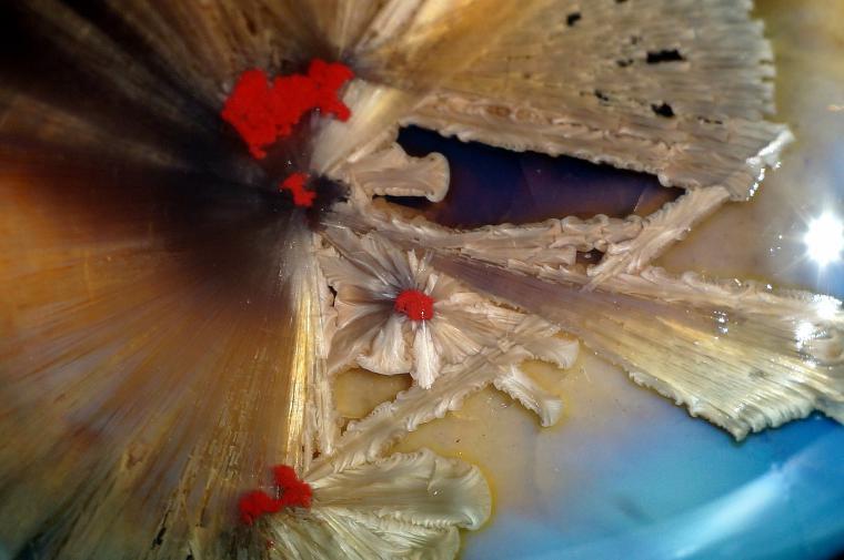 фарфор кристаллы