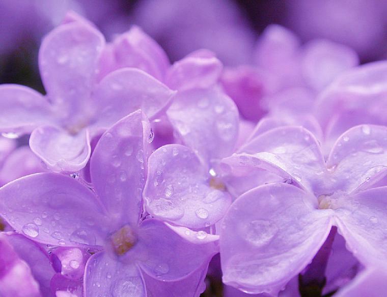 Цветы своими руками на стол