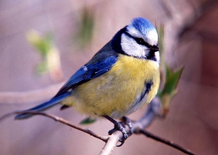 Каждой птице свой дом, фото № 9