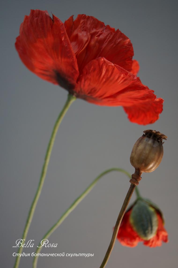 белла роза