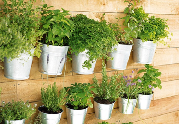 Полезные растения выращивание дома 77