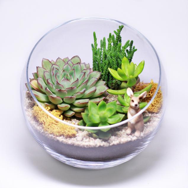 флорариум своими руками, композиции из цветов, семинары