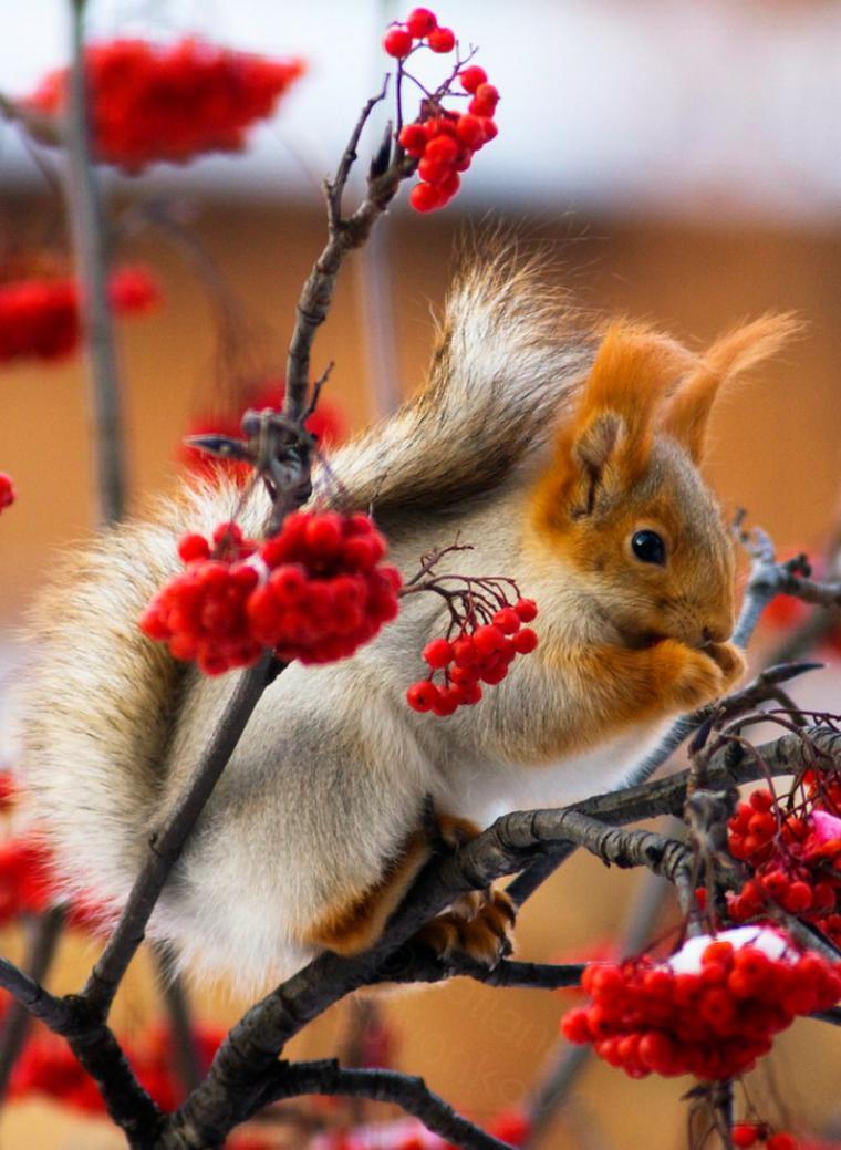 картинки доброе утро позитивные красочные природа зима обещали, что ничего