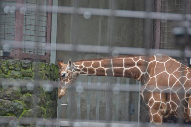 Дикий забег по Токио за 7 дней. День пятый. Зоопарк Уэно и детские магазины., фото № 50