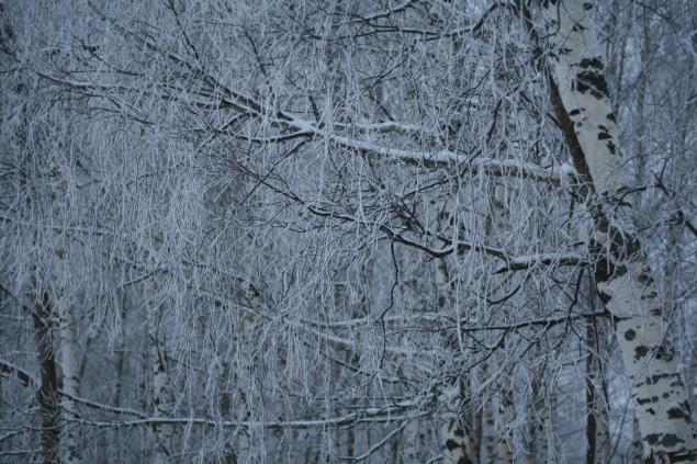 Русские края, фото № 15