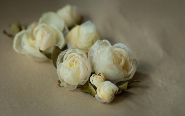 солнечные розы