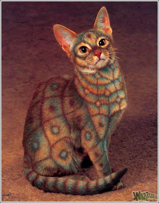 Зачем красить кошек?, фото № 1