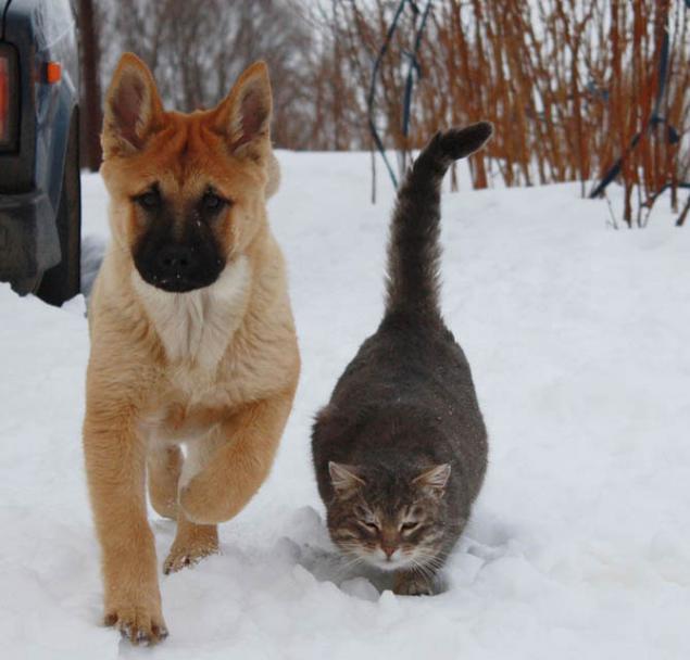 котята кошки коты, портрет питомца