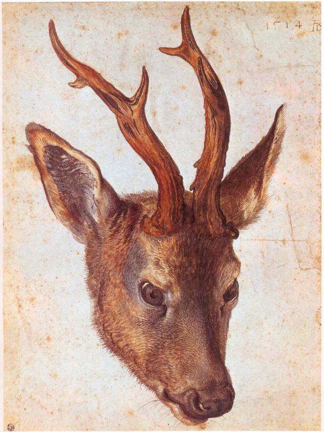 Сергей Погонин - Анималистика. Альбрехт Дюрер (Albrecht Dürer).