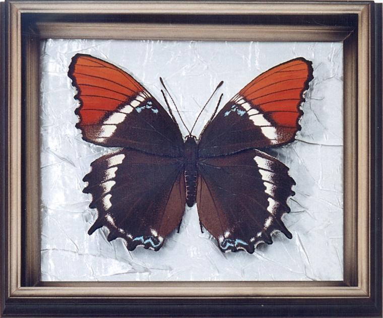 Бабочка по имени